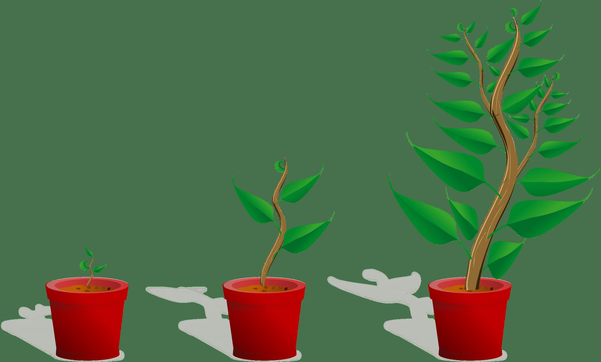 Organisch met Google Grants groeien.